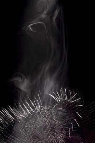 Herbarium Collection - Artists - Adela Goranova - Selected works 4