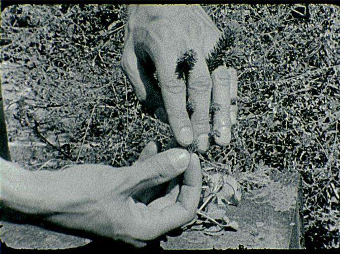 Herbarium Collection - Artists - Merve Kılıçer - Selected works 3