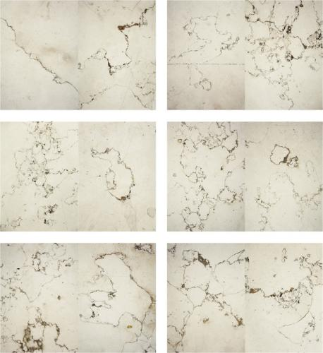 Herbarium Collection - Artists - Elena Grossi - Selected works 1