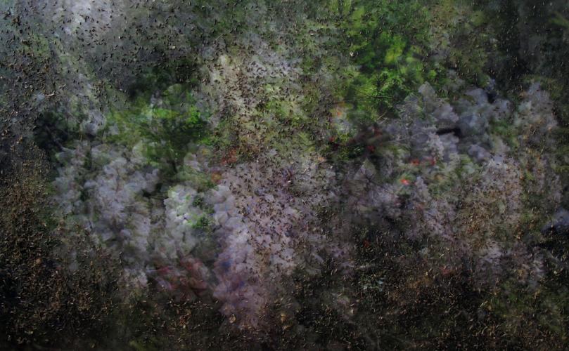 Herbarium Collection - Artists - Kinga Kielczynska - Selected works 7