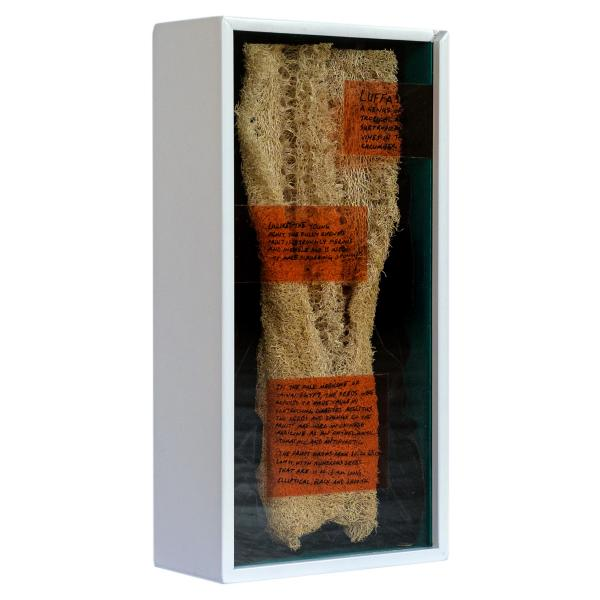 Herbarium Collection - Collection - Luffa - Merve Kılıçer