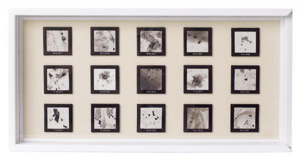 Herbarium Collection - Collection - Notturni - Elena Grossi