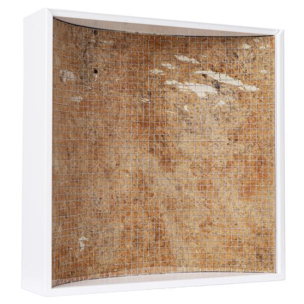 Herbarium Collection - Collection - 2020 - Kai Masayuki