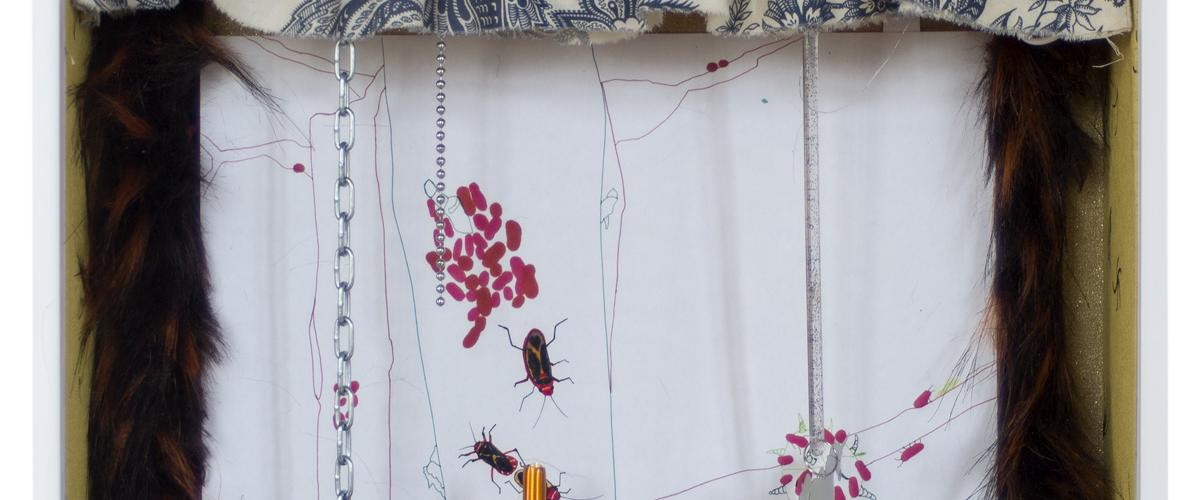 Herbarium Collection - Collection - Insects and Bugs - Angelica Falkeling